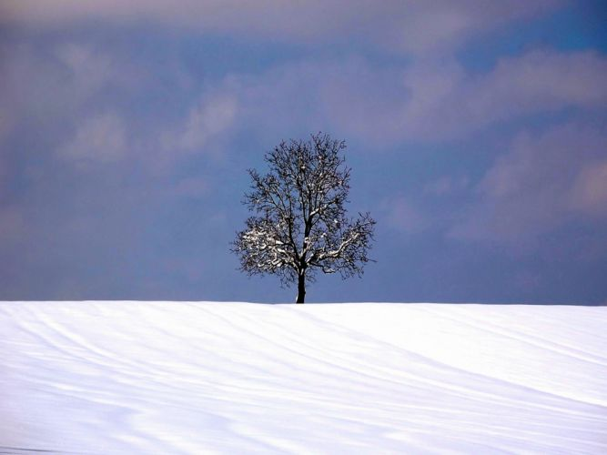 Tree on Horizont in Snow wallpaper