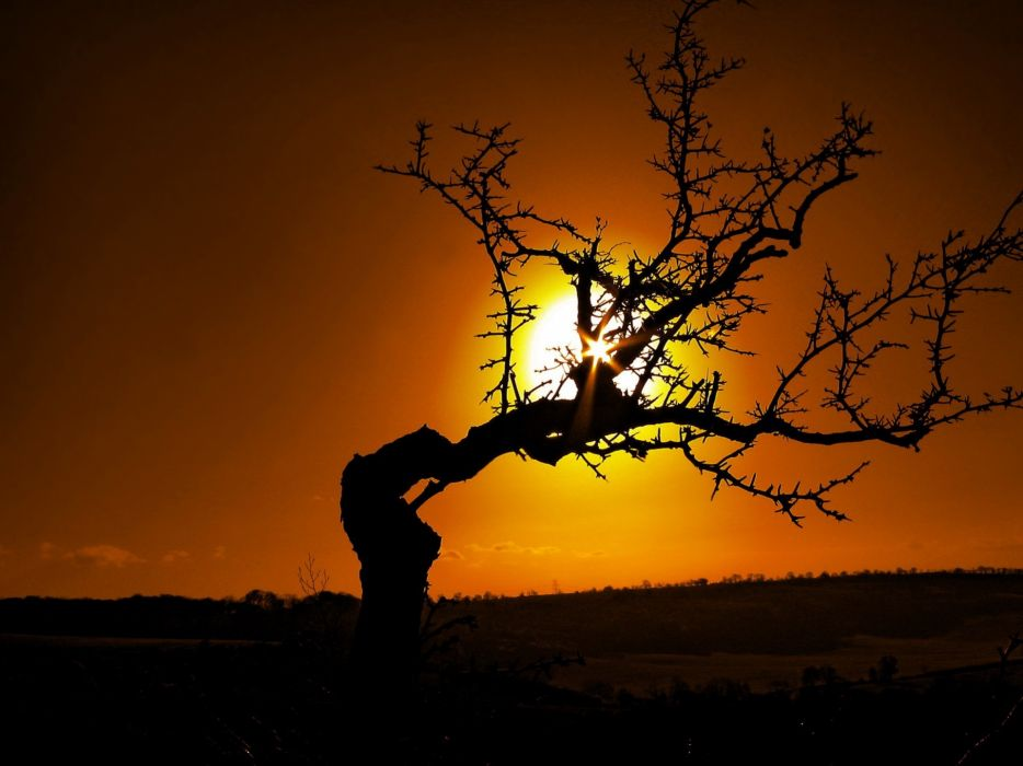 Bended Tree and Golden Sun wallpaper