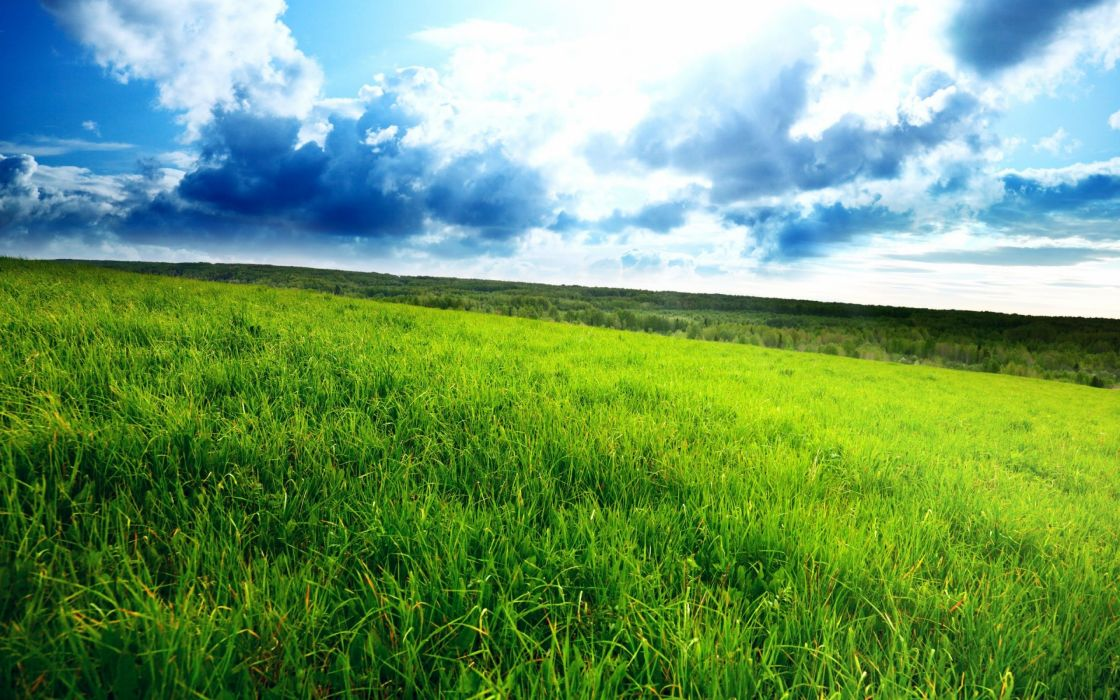 Superb Green Field wallpaper