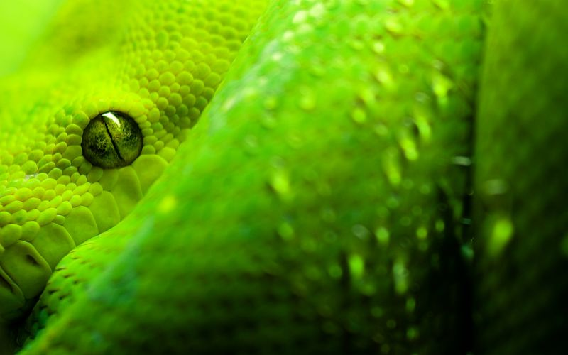 Great Snake Eyes wallpaper