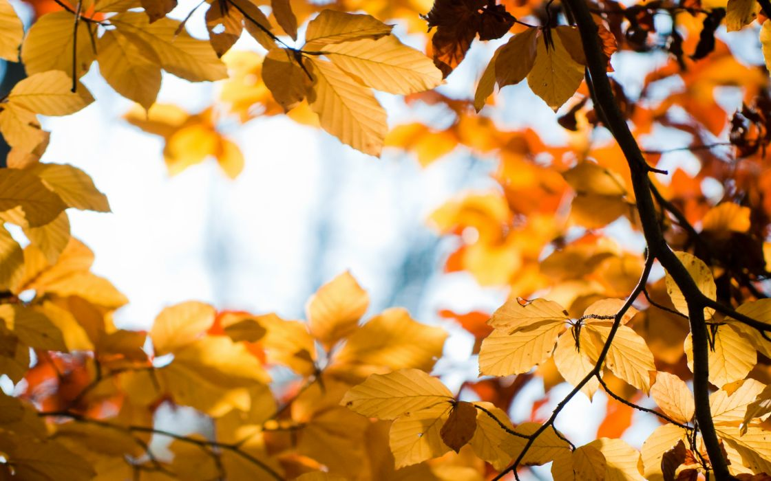 Yellow Autumn wallpaper