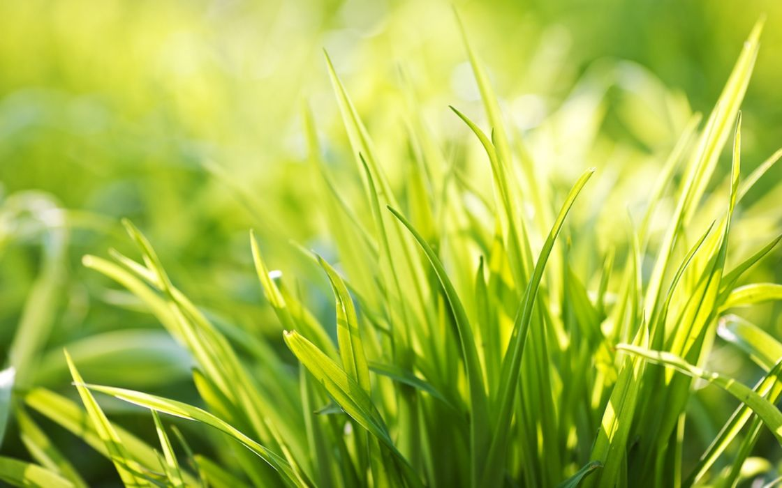 Ever Green Grass wallpaper
