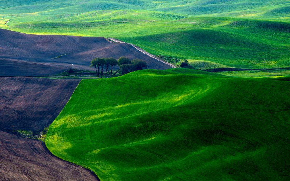 Dreamy Green Fields wallpaper