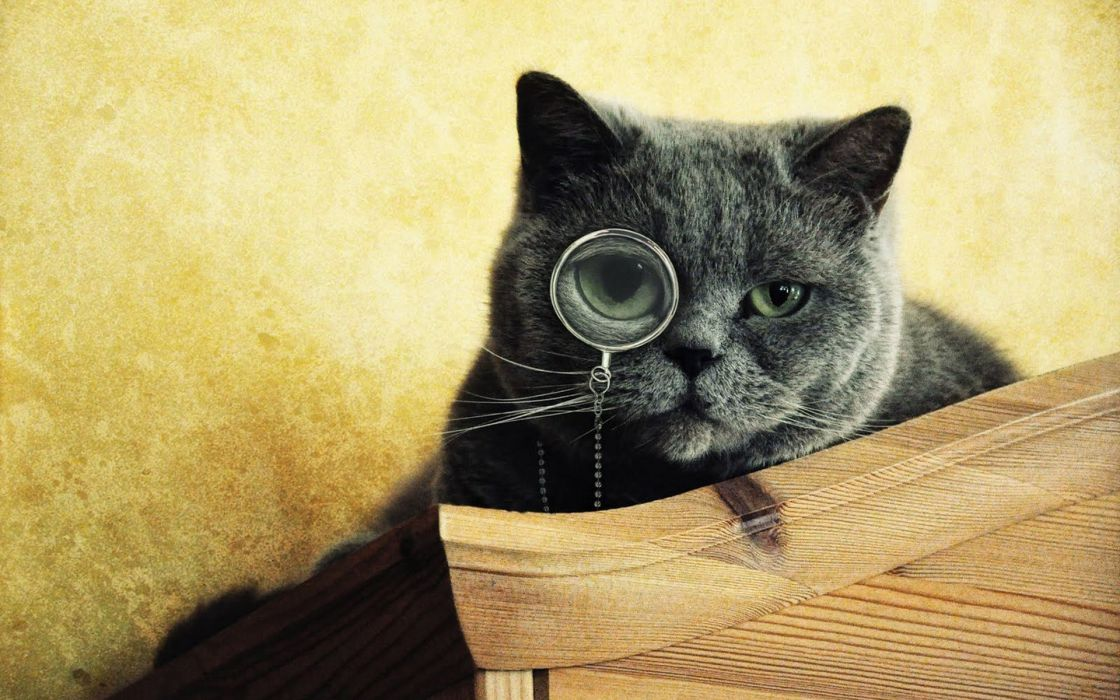 Smart Cat wallpaper