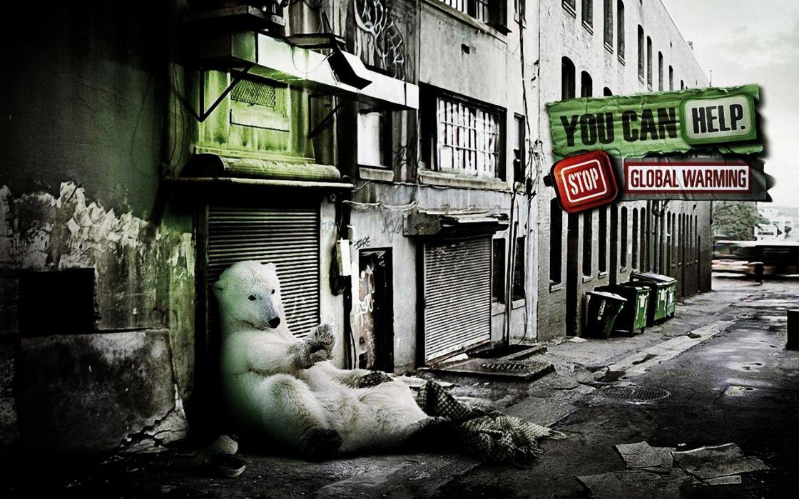 A Friendly Polar Bear wallpaper