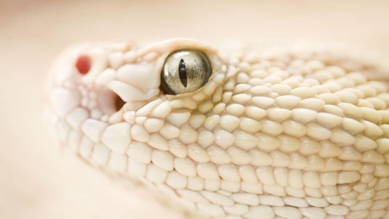 Dangerous Snake wallpaper
