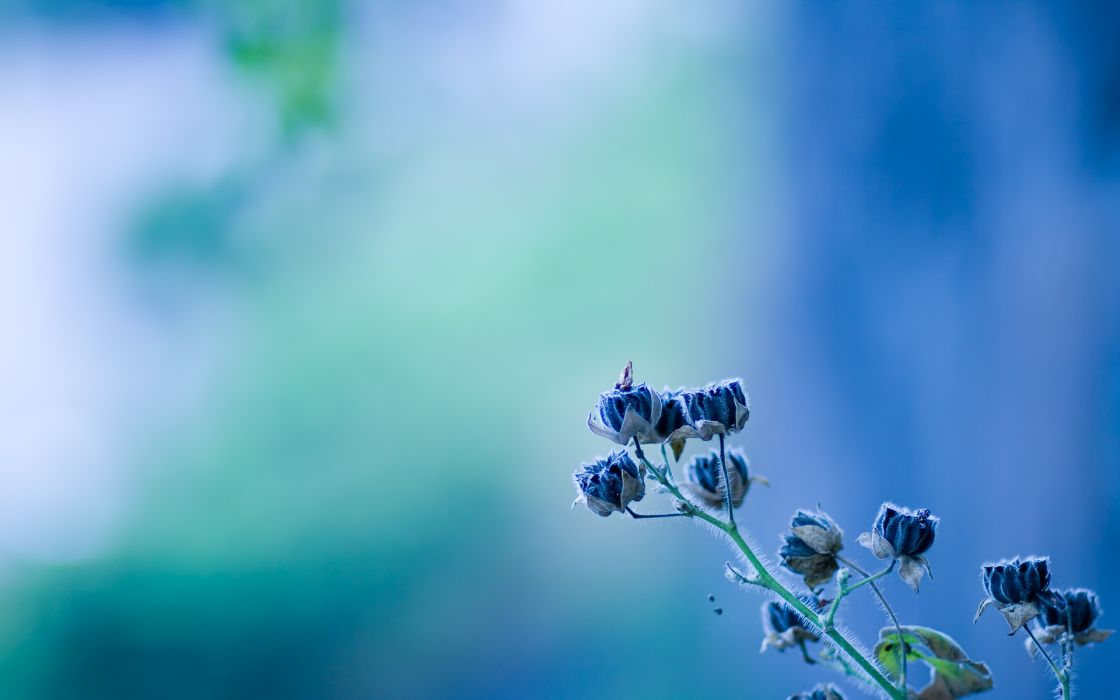 Rare Flowers wallpaper