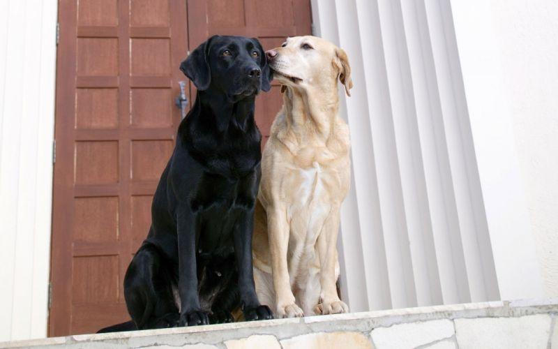 Dogs in Love wallpaper