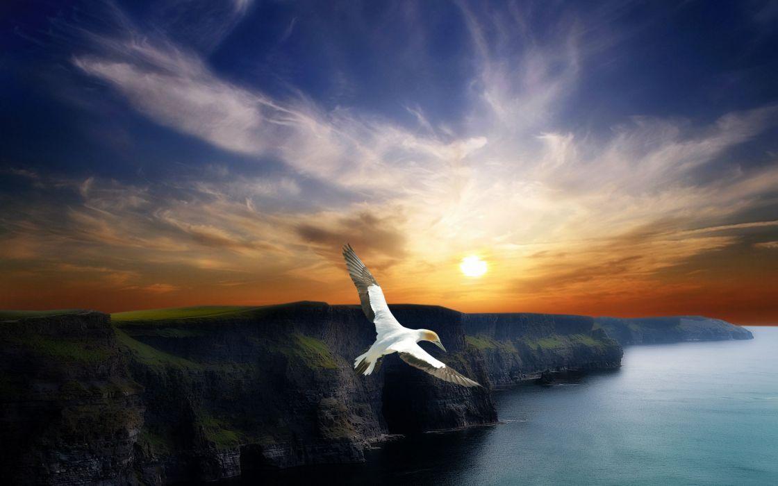 Wing Flight wallpaper