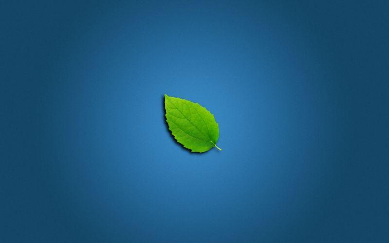 Lonely Leaf wallpaper