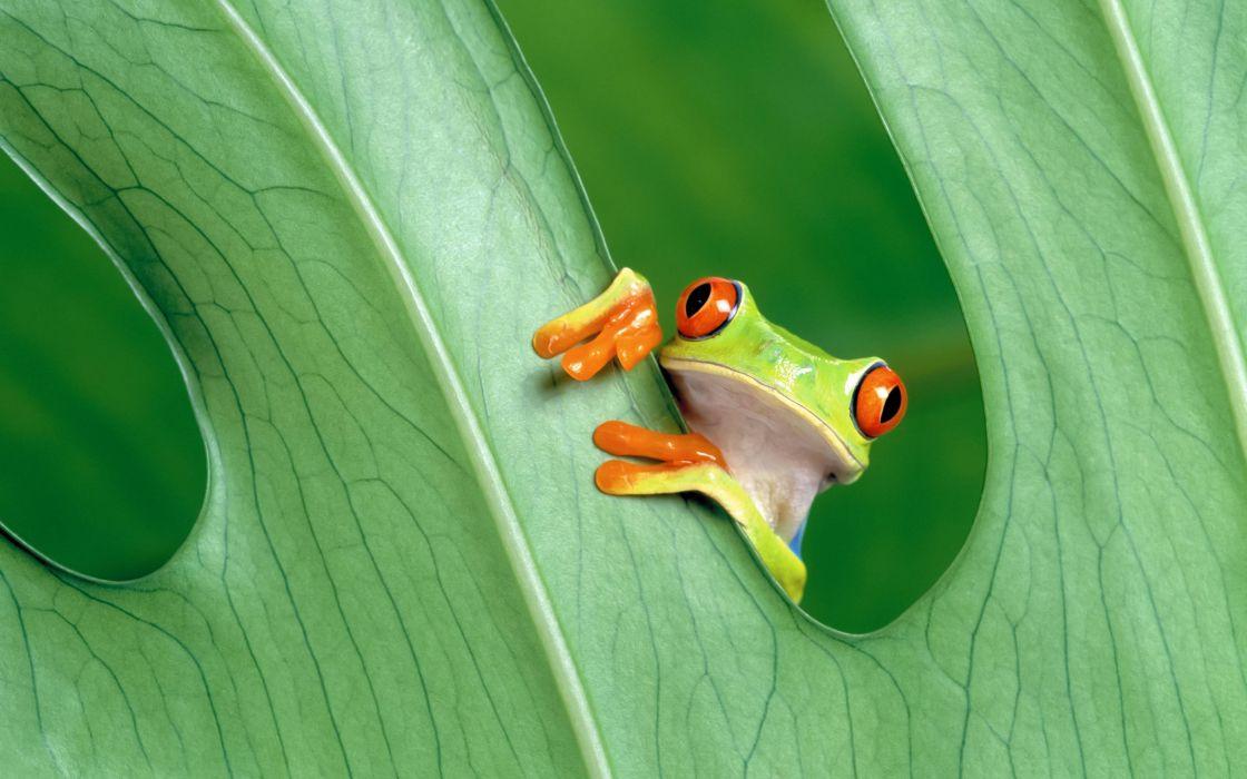 Cute Little Frog wallpaper