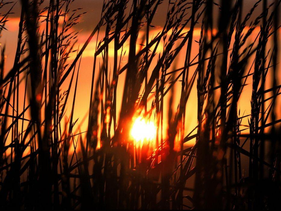 Early Morning Sun Shining Through the Tall Grass wallpaper