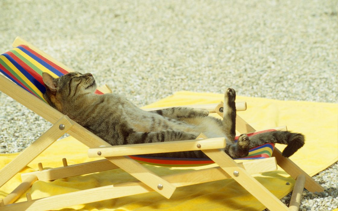 Cat Relaxing on Lounge Chair wallpaper
