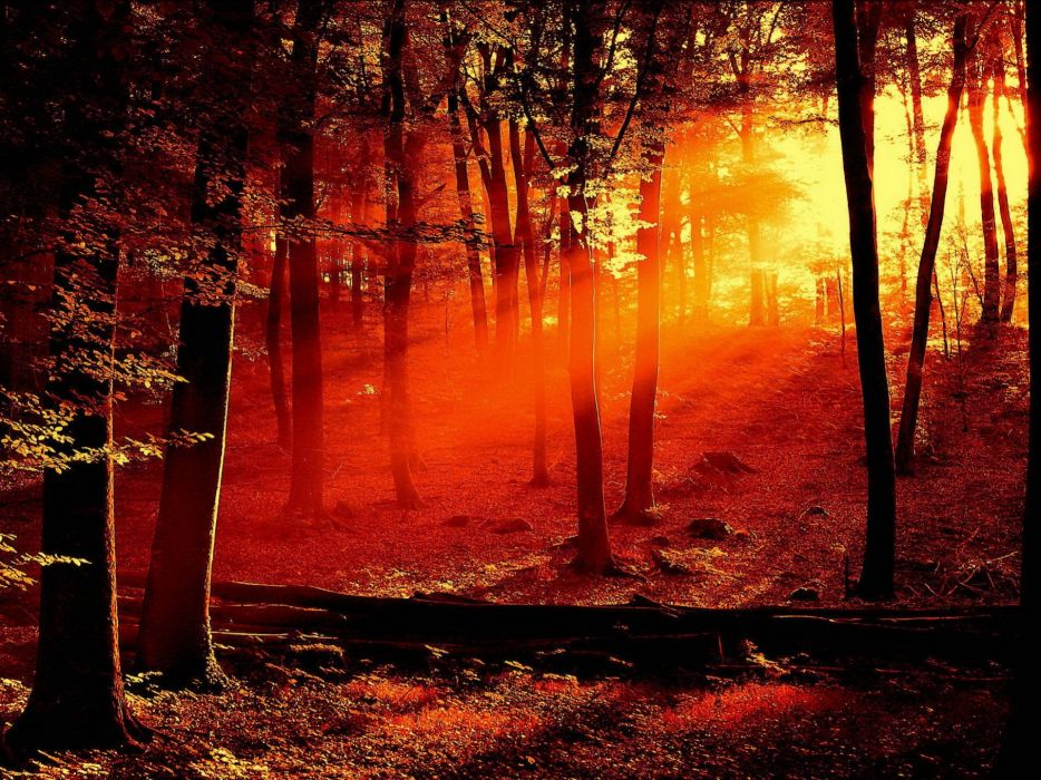 Sun Shining Through Trees Casting a Red Light wallpaper