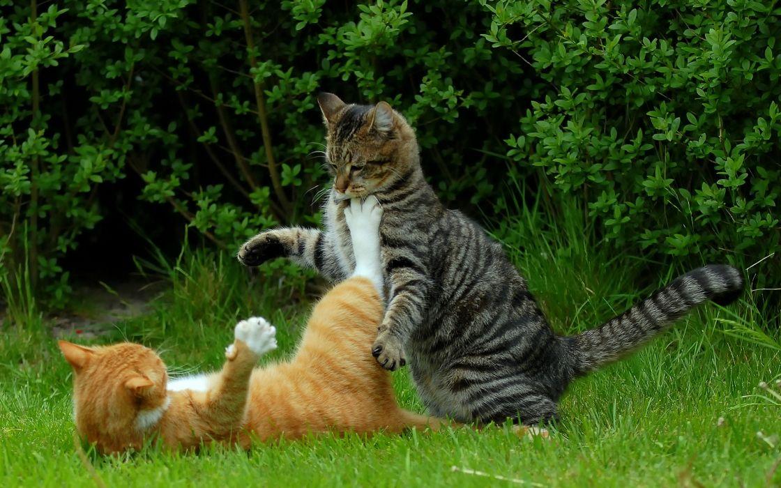 Cat Fight wallpaper