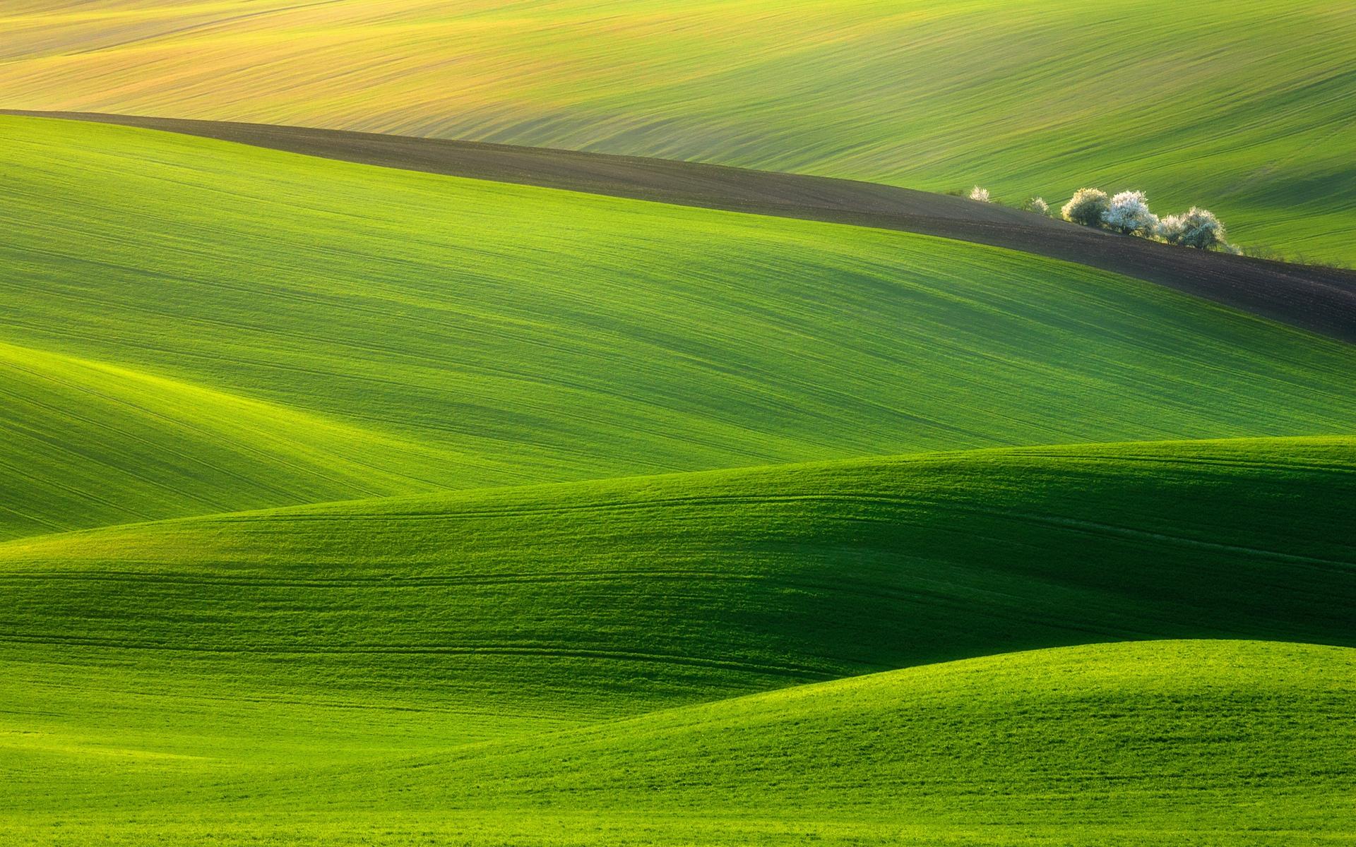spectacular green field wallpaper | 1920x1200 | 5152 | wallpaperup