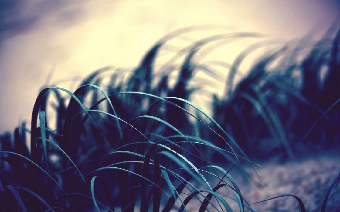Grass photo wallpaper