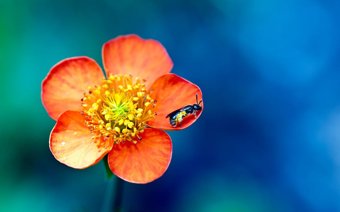 Flower and bee wallpaper