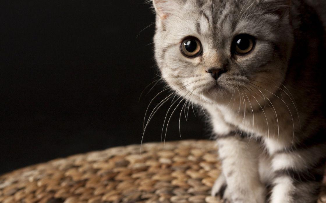 Curious cat wallpaper