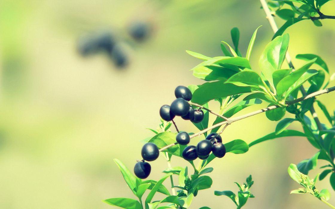 Wild berries wallpaper