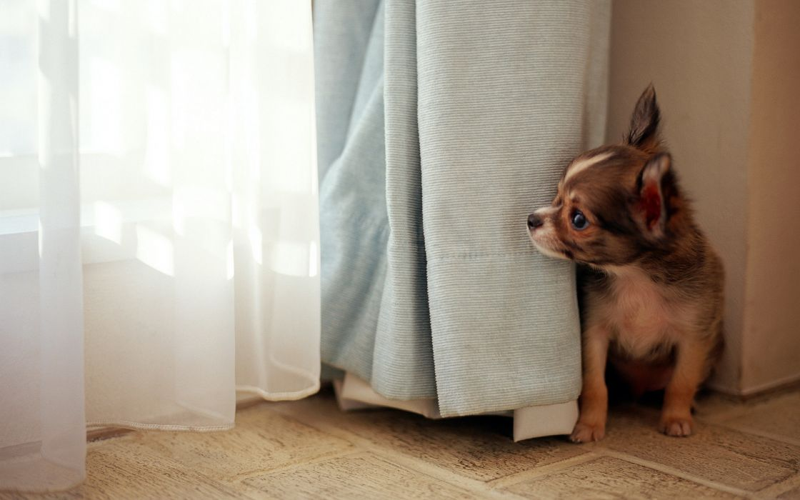 Dog at the window wallpaper