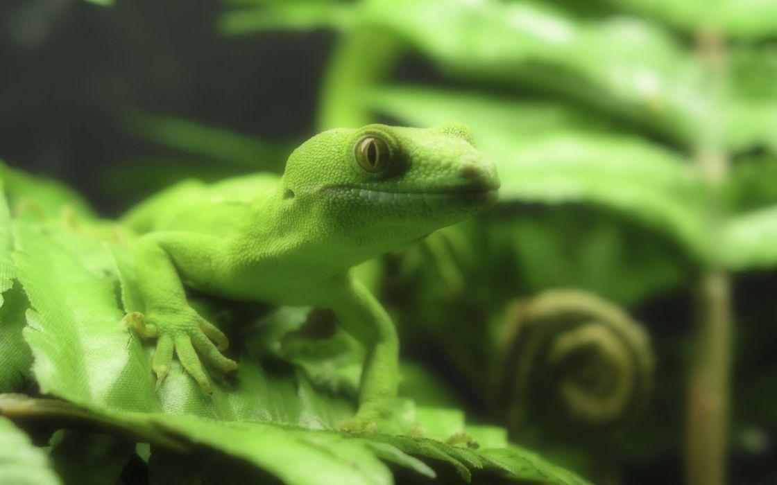 Lizzard in green wallpaper
