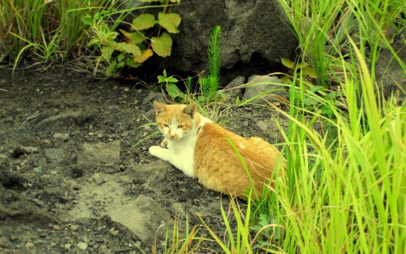 Tabby cat in nature wallpaper