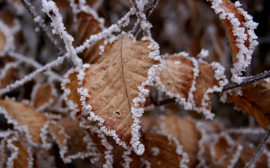 Frozen leaves wallpaper