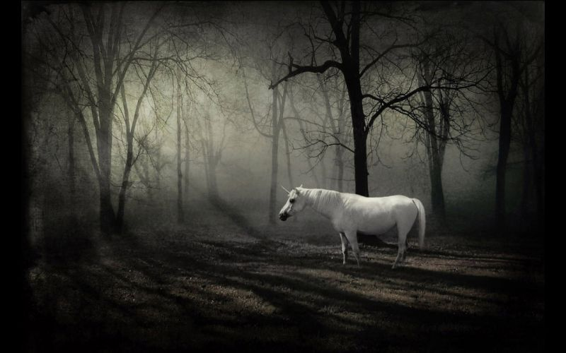 Unicorn in the forest wallpaper