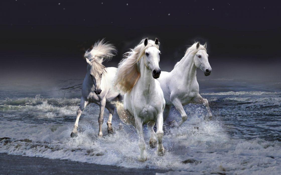 Mystic horses wallpaper