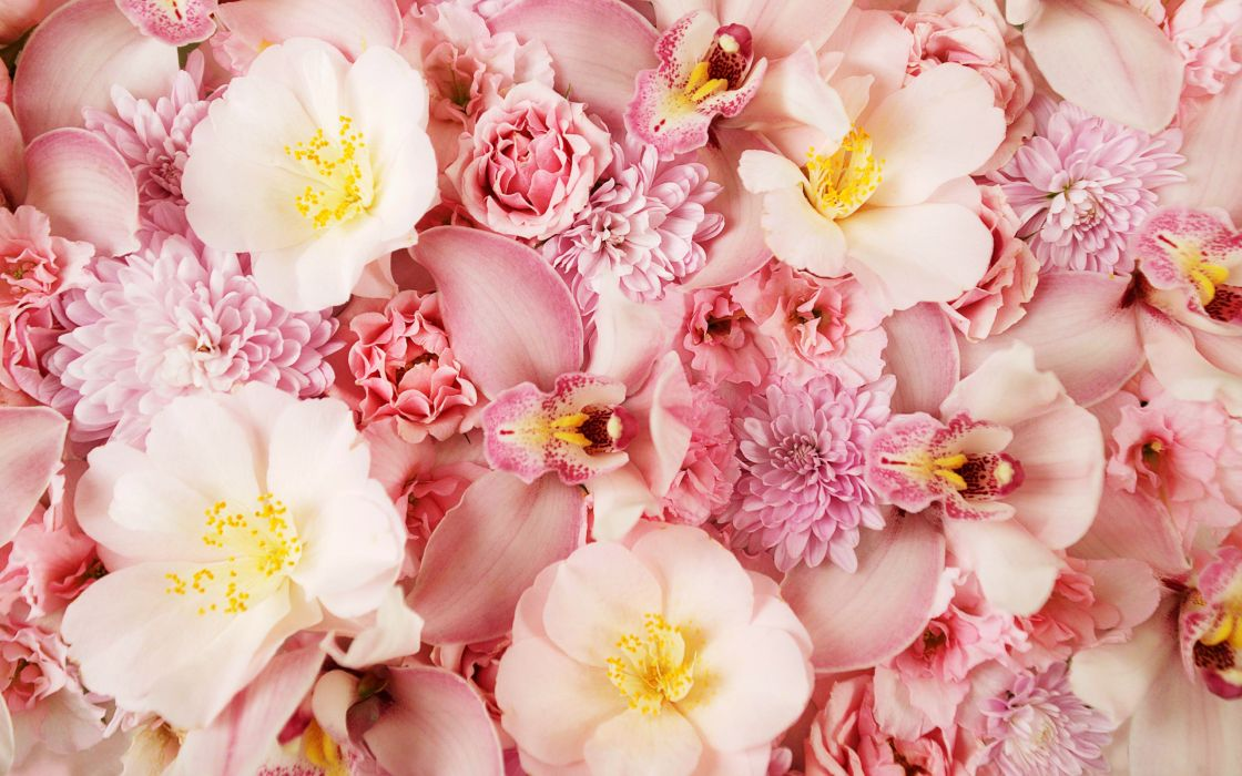 Pink orchids wallpaper