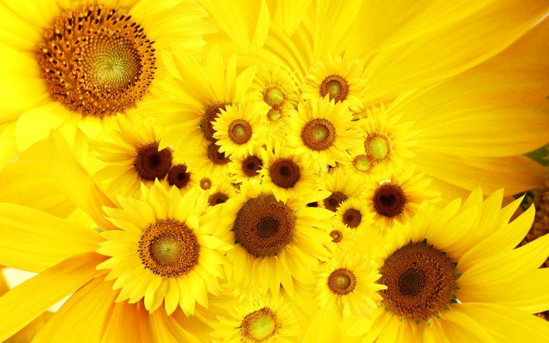 Cool sunflowers wallpaper