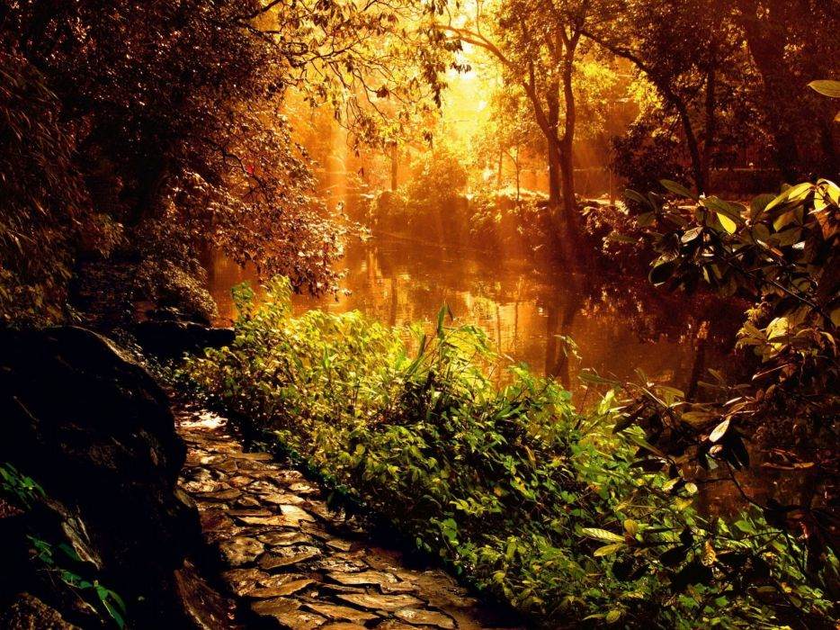 Sun shining through trees lighting a river wallpaper