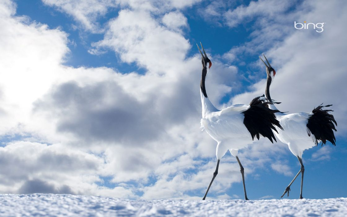Japanese cranes wallpaper