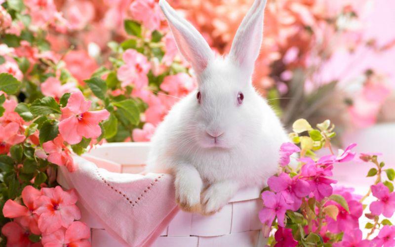 Springtime hare wallpaper