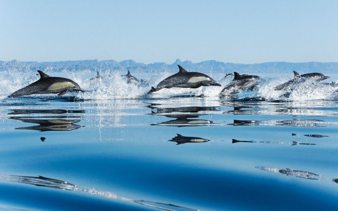 Dolphins in sea wallpaper