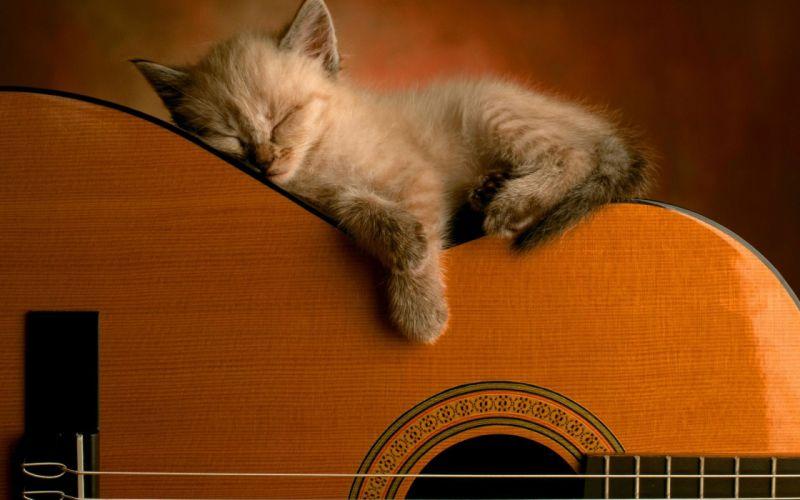 Sleeping soundly wallpaper