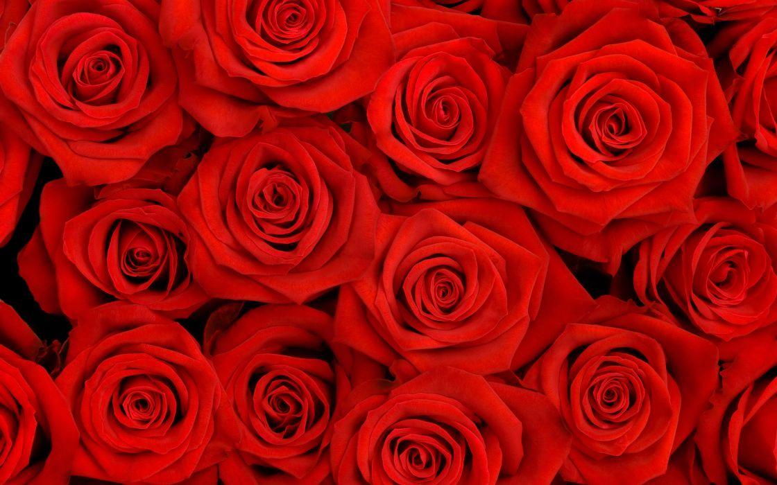 Lovely roses wallpaper