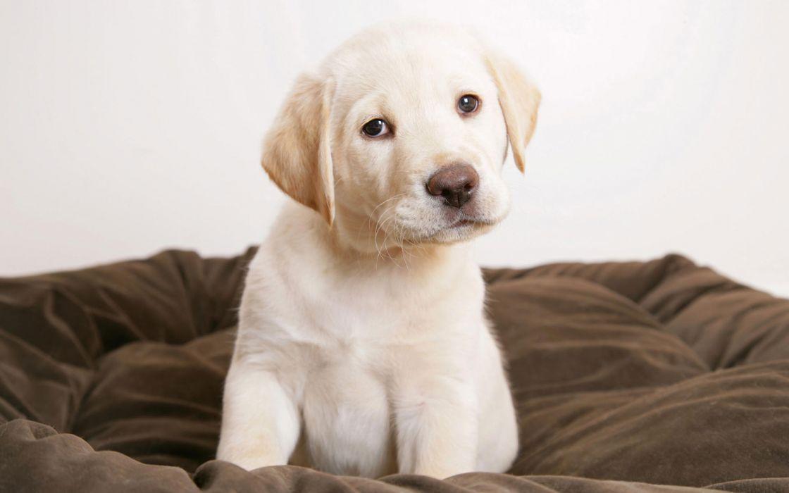 Cute puppy eyes wallpaper