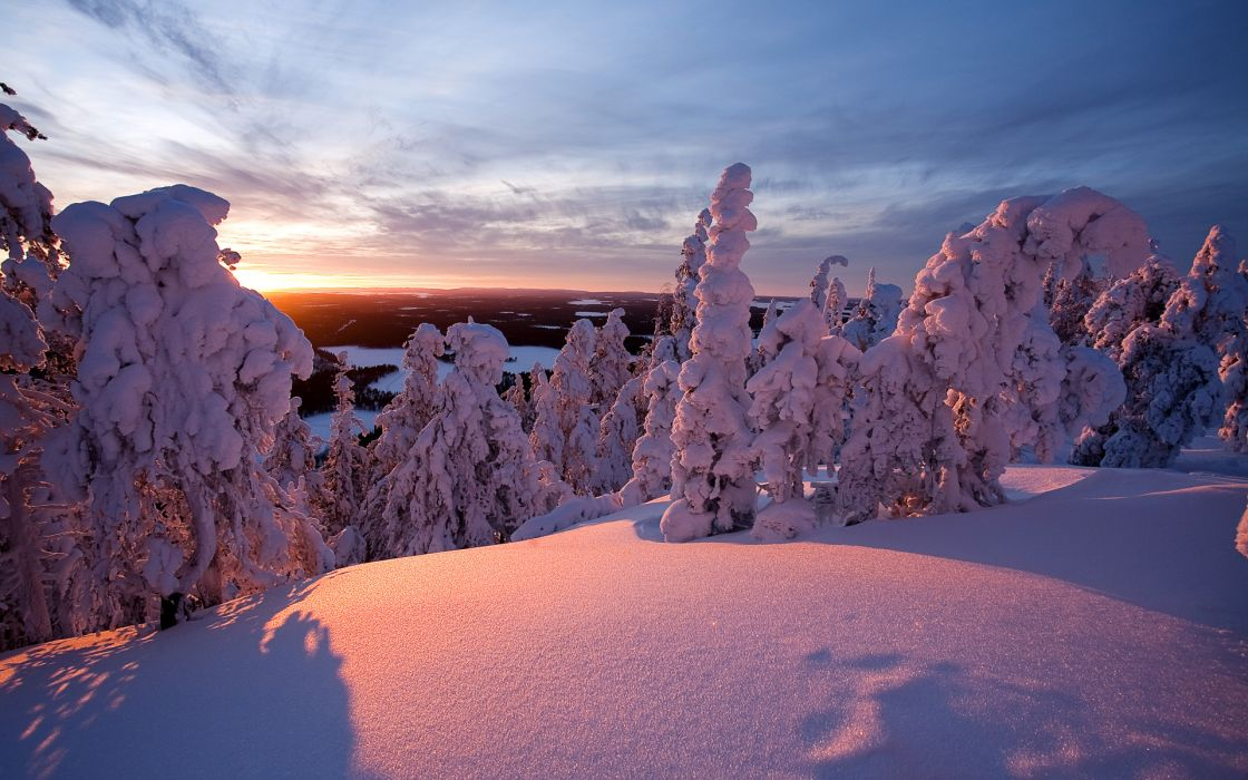 Snow covered trees wallpaper