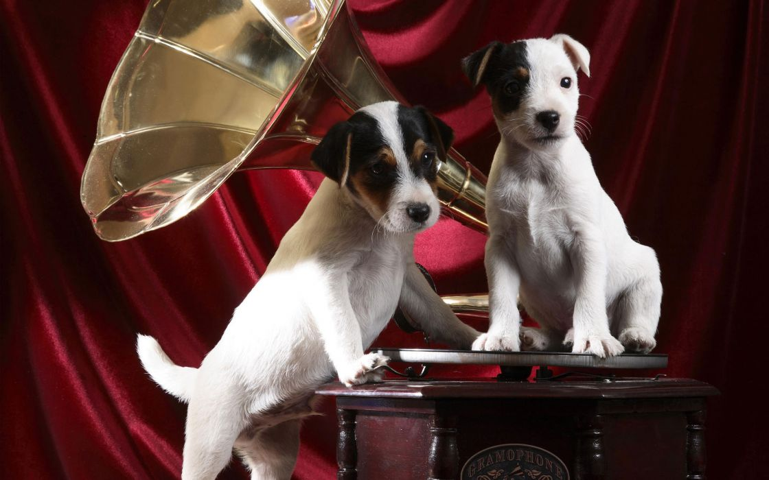 Gramophone pups wallpaper