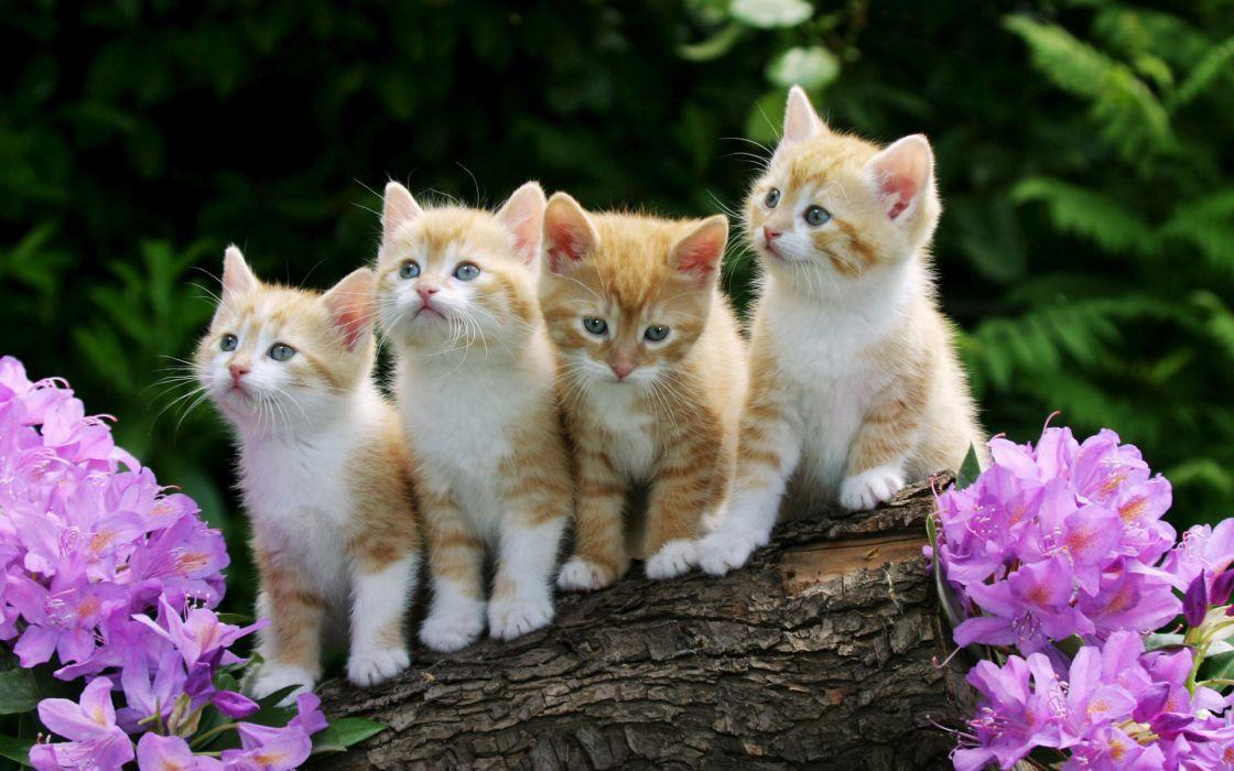Curious kittens wallpaper