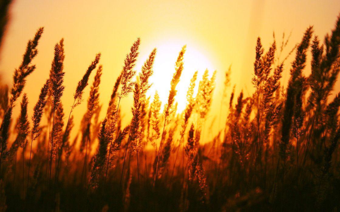 Beautiful sun rise wallpaper