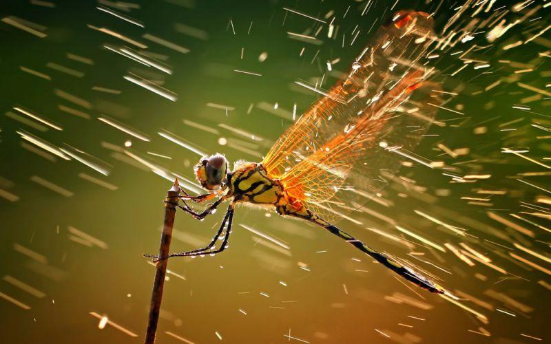 Dragonfly and water macro wallpaper