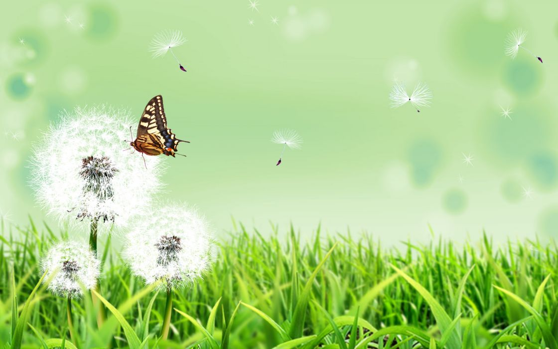 Butterfly nature wallpaper