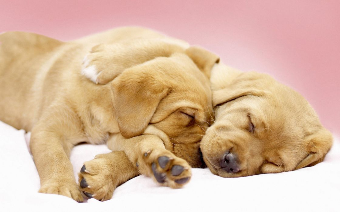 Canine cuddles wallpaper