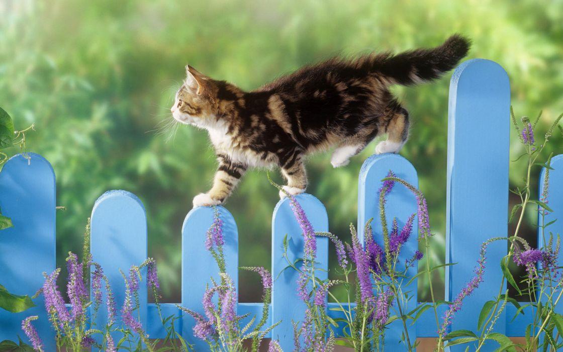 Kitten balance wallpaper