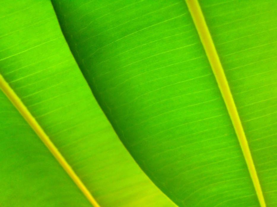 Green leafs wallpaper