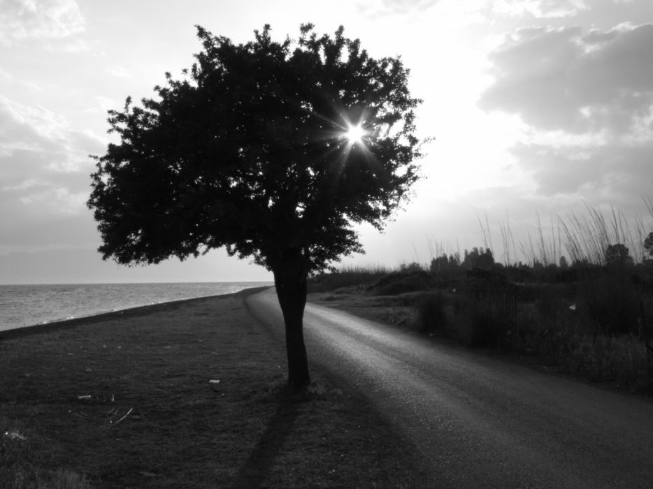 Tree by the ocean  black and white photo wallpaper