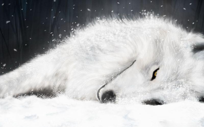 White fox in ice wallpaper